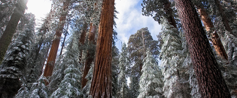Redwood mountain